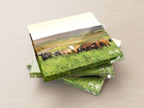 Rolling Hills With Cows Yellow - Glass Coasters